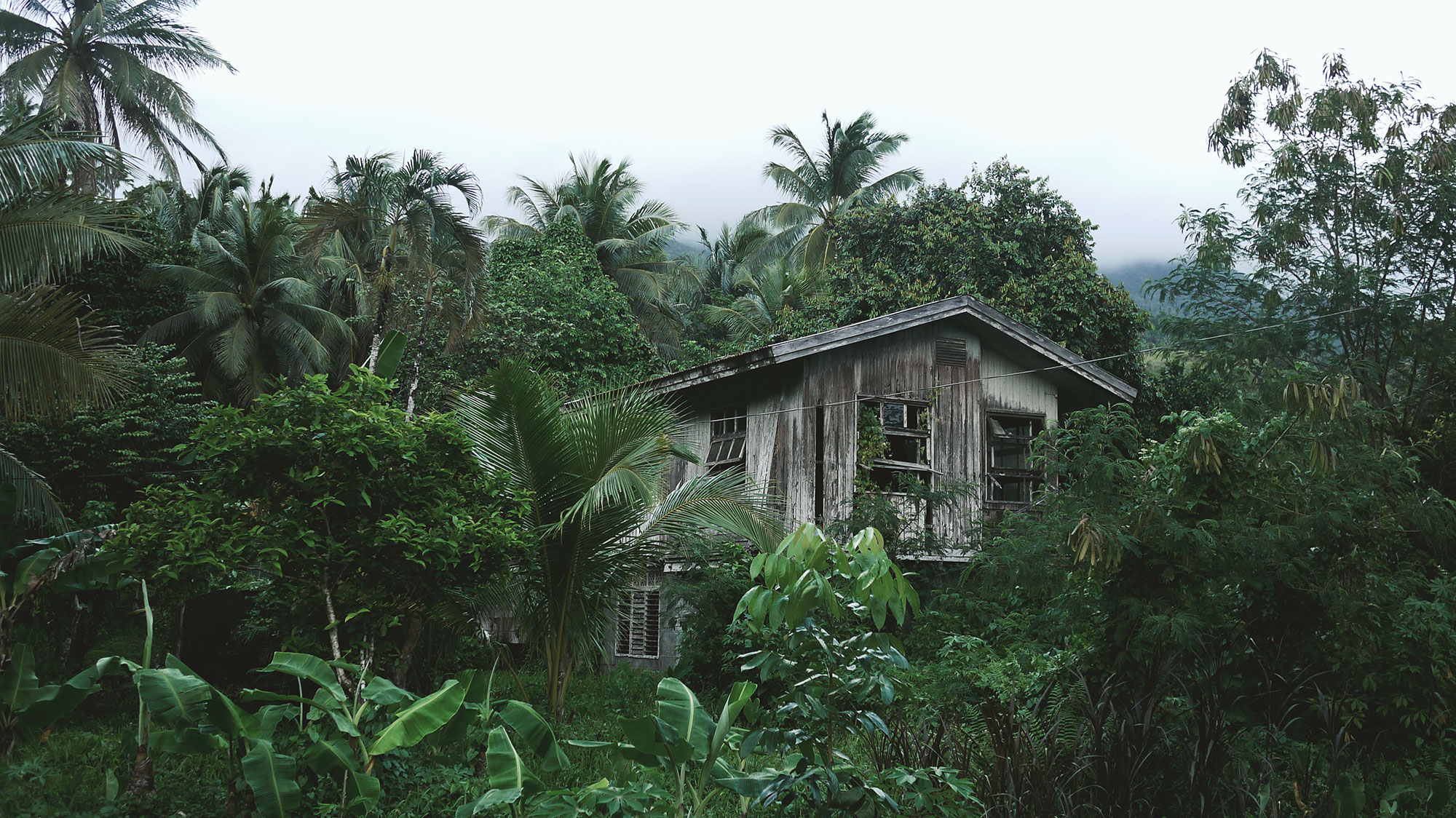Abandoned Tropical House