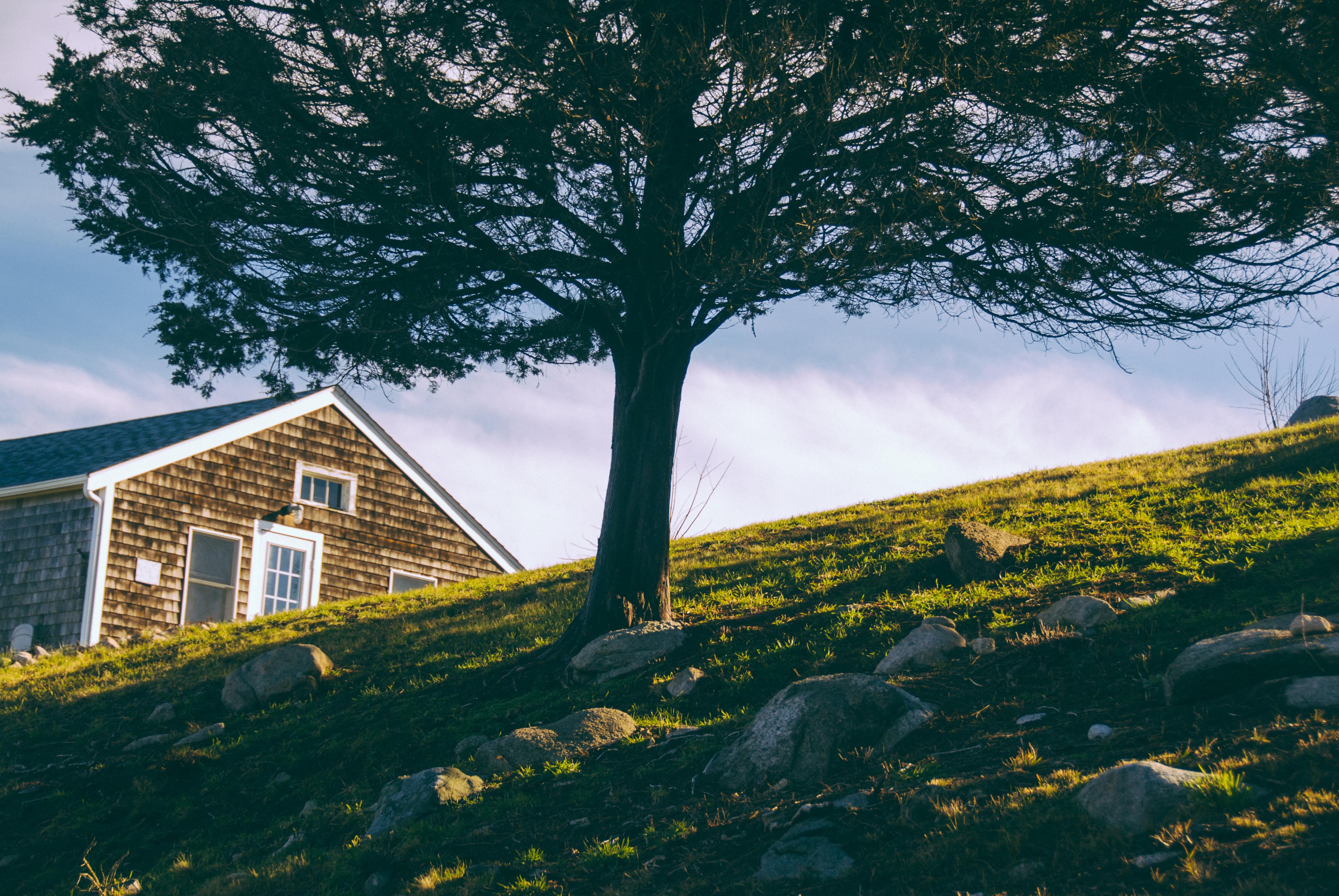 Hillside Tree